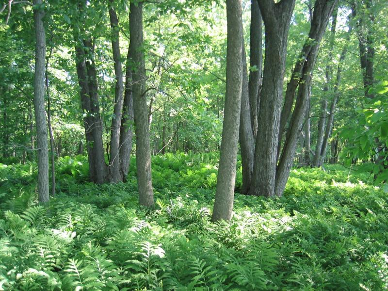 Floodplain forest at Saratoga National Historical Site (plot SBB1) Gregory J. Edinger