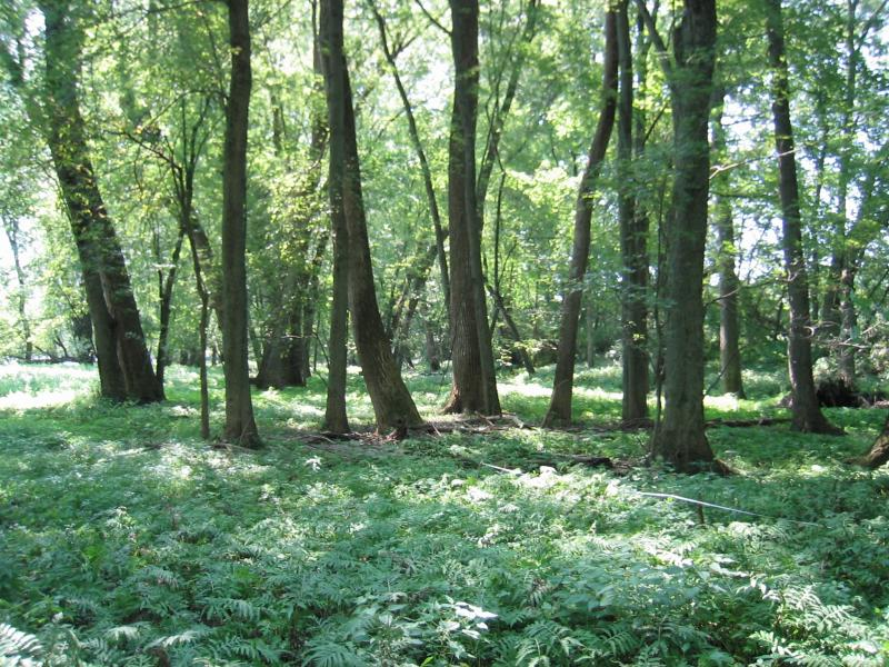 Floodplain forest at Saratoga National Historical Park - Schuylerville Gregory J. Edinger