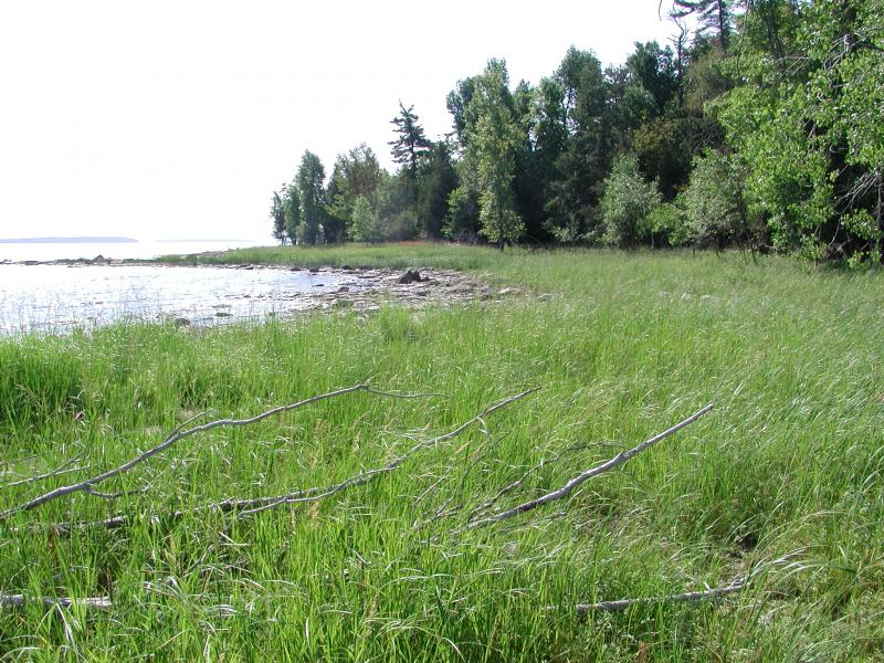 Cobble shore wet meadow at Valcour Island Stephen M. Young