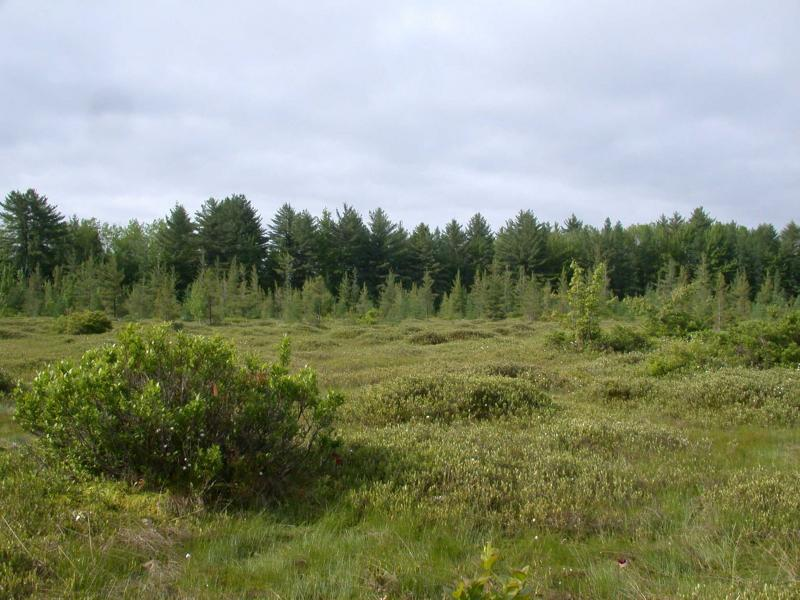 Inland poor fen and dwarf shrub bog mosaic at Pineville Swamp. Andrew Nelson, SUNY-Oswego