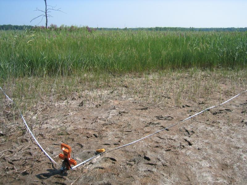 Inland salt marsh plot at Carncross Salt Pond. Gregory J. Edinger