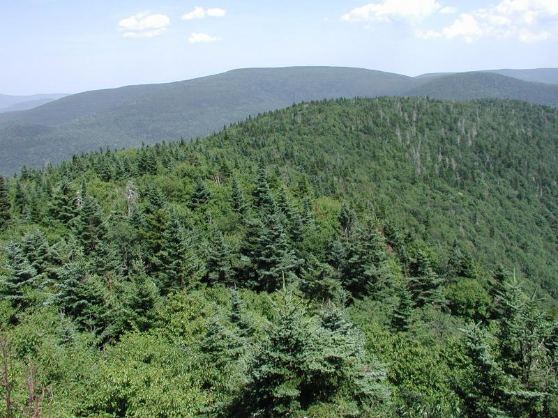 Ridge from summit of Westkill Mountain, Catskills, Mountain fir forest Timothy G. Howard
