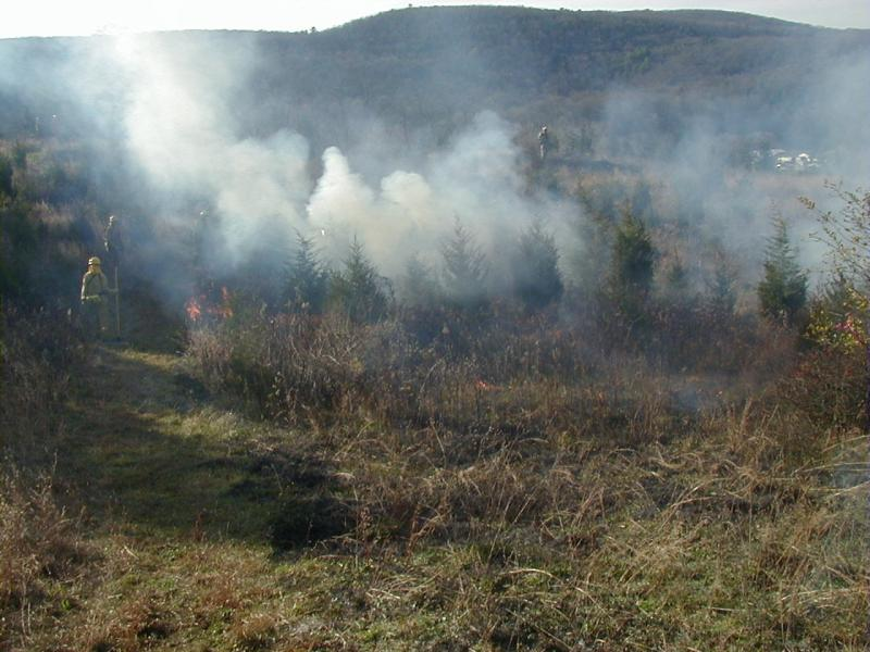 Prescribed fire in calcareous red cedar barrens at Nellie Hill TNC-ENY staff
