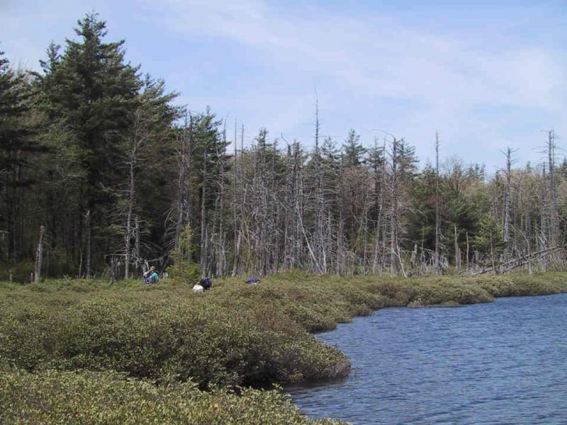 Dwarf shrub bog at Emmons Pond Aissa L. Feldmann