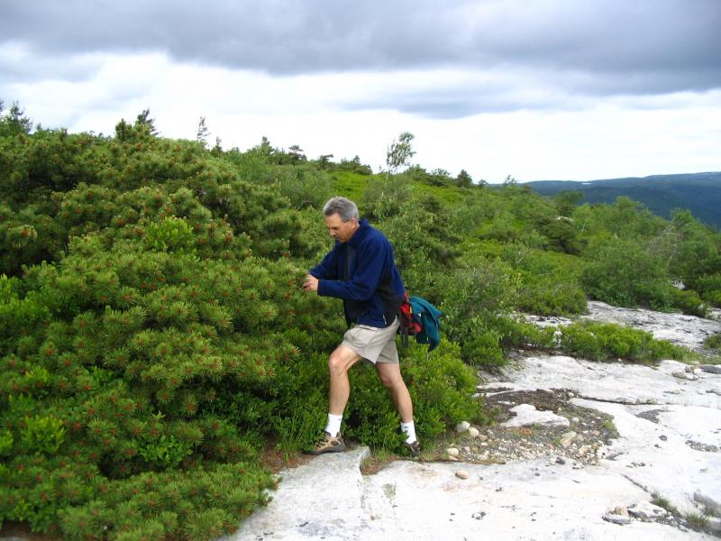 Steve Young in dwarf pine ridges at Sam's Point in the Shawangunk Mountains Laura J. Lehtonen