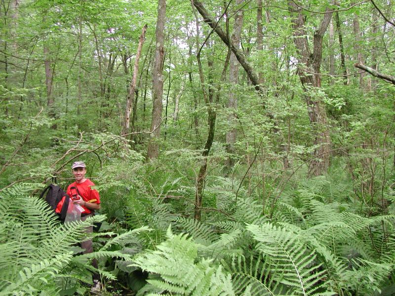 Troy Weldy at Grand Pond Swamp, red maple hardwood swamp Timothy G. Howard