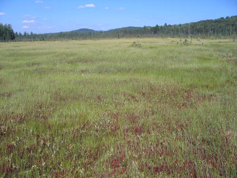 Patterned peatland at Spring Pond Bog. Gregory J. Edinger