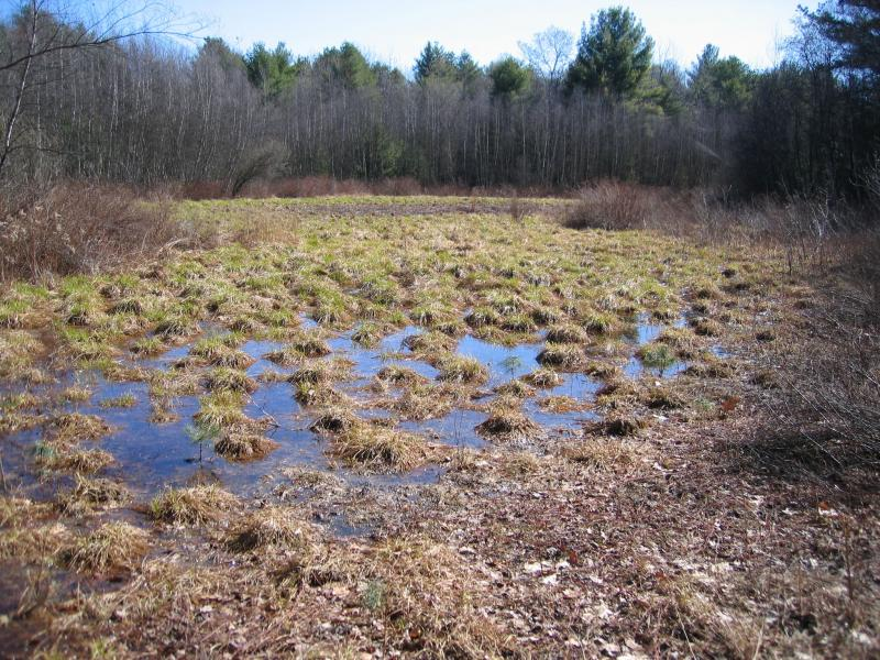 Pine barrens vernal pond at Ballard Corners in Wilton Preserve. Gregory J. Edinger