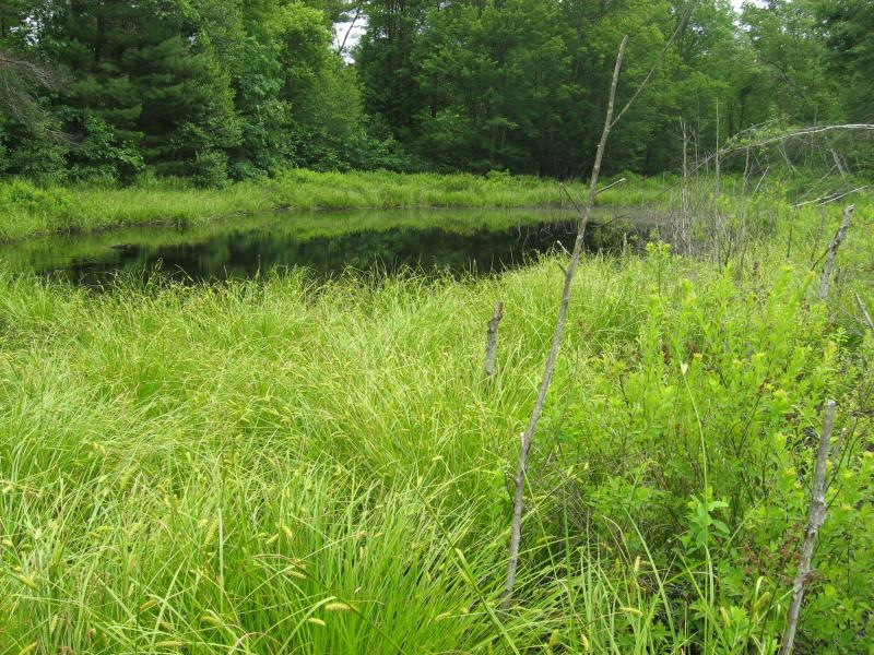 Pine barrens vernal pond on the Fox parcel in Wilton Wildlife Preserve & Park Gregory J. Edinger
