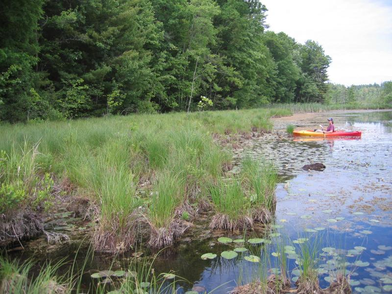 NY Natural Heritage director DJ Evans in kayak viewing tussock sedge (Carex stricta) dominated sedge meadow at Glen Lake Fen. Gregory J. Edinger