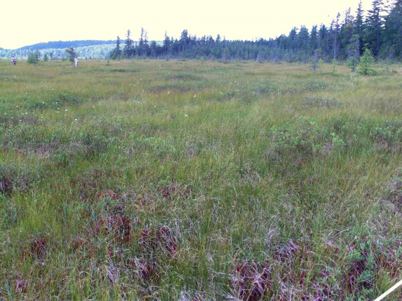 Releve plot in patterned peatland. Elizabeth A. Spencer