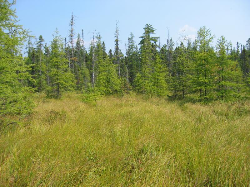 Inland poor fen at Raquette Boreal Forest Shane Gebauer