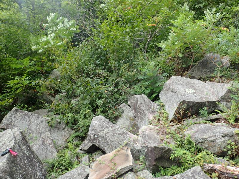 Calcareous talus slope woodland at Payne Lake Cliffs. Gregory J. Edinger