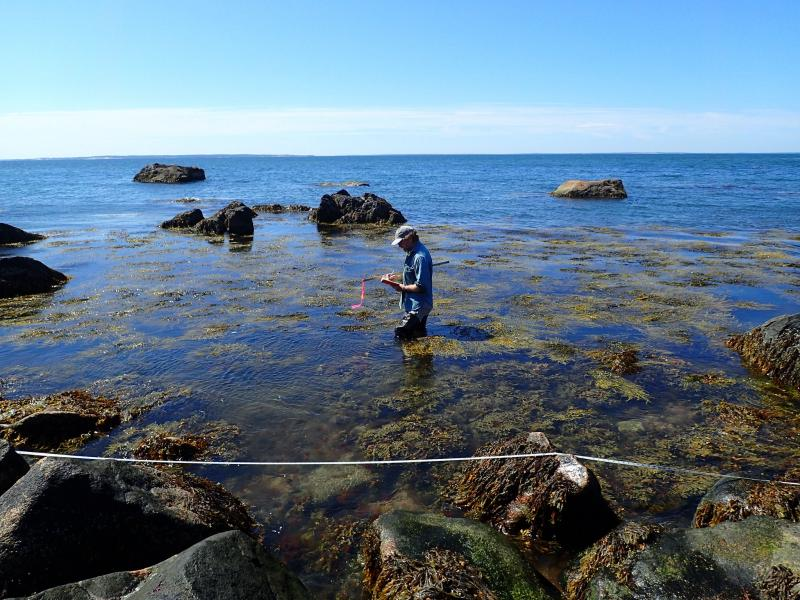 Greg Edinger sampling marine rocky intertidal plot (PI19) at Plum Island. Kurt Klotzer