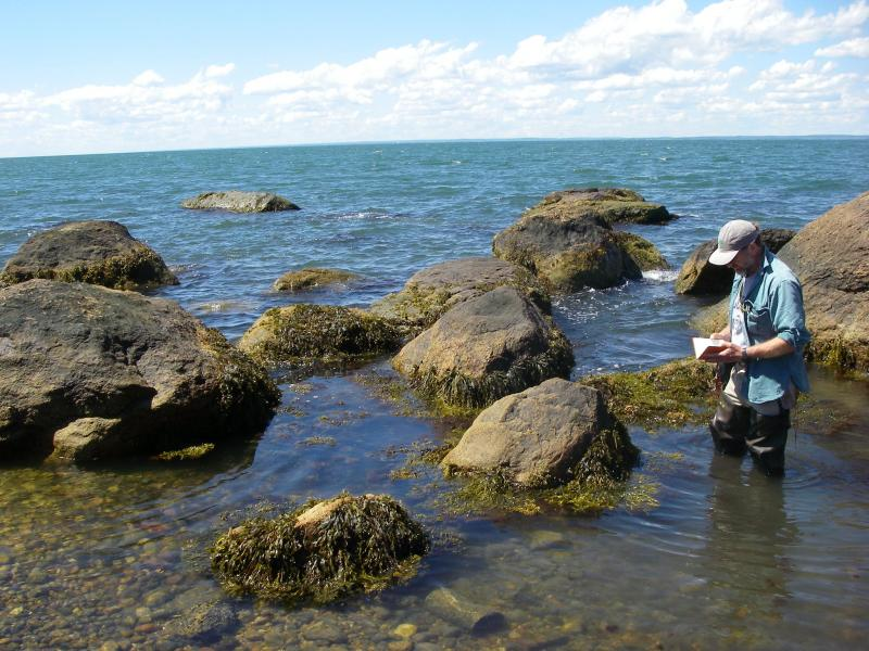 Greg Edinger sampling marine rocky intertidal community on Plum Island. Erin White