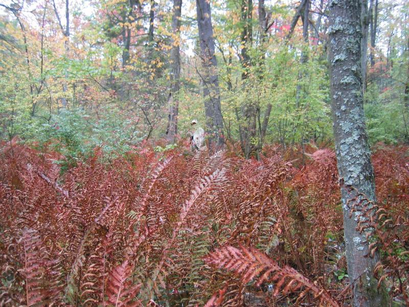 Red maple-blackgum swamp at Cohen Road Swamp in Greenfield State Forest. Gregory J. Edinger