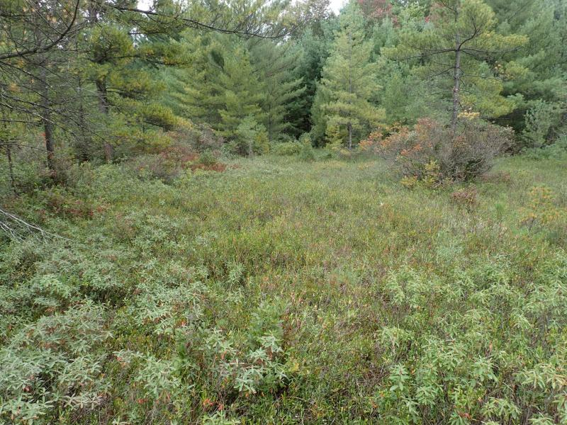Dwarf shrub bog at Rome Sand Plains Hogsback Road North. Gregory J. Edinger
