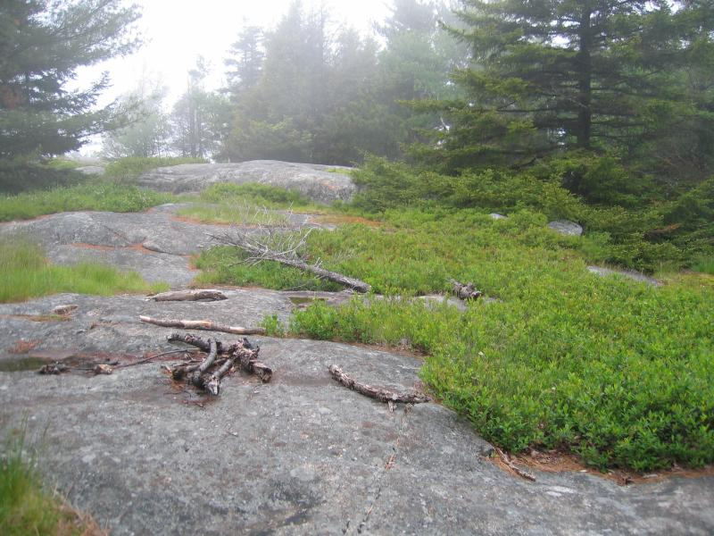 Red pine rocky summit on Buck Mountain in Washington County, NY. Gregory J. Edinger