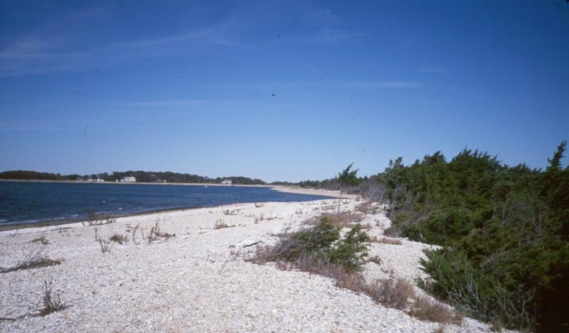 Maritime beach and maritime red cedar forest at Orient Beach State Park. D.J. Evans