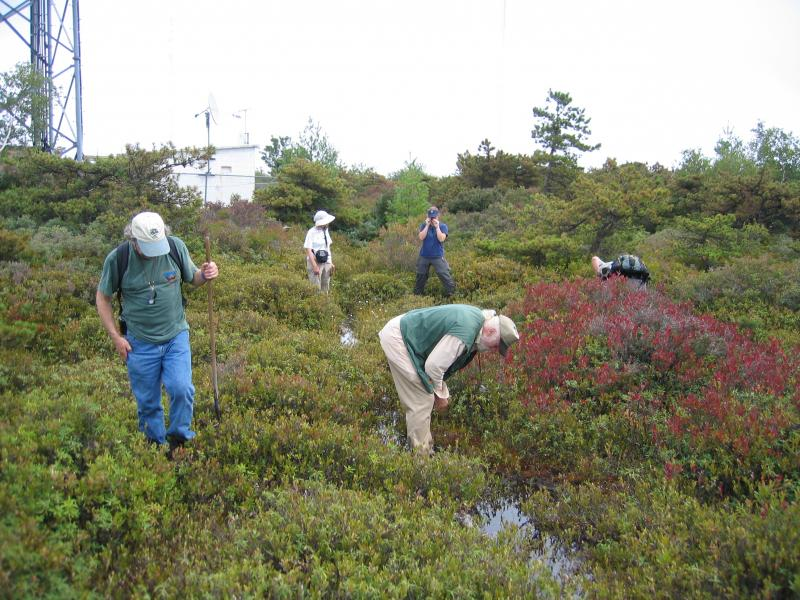 Dick Andrus and Al Breisch exploring perched bog at Sam's Point in the Shawangunk Mountains. Gregory J. Edinger