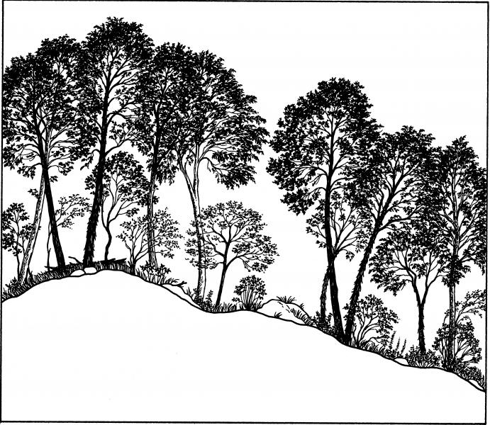 Appalachian oak-hickory forest illustration. Darcy P. May