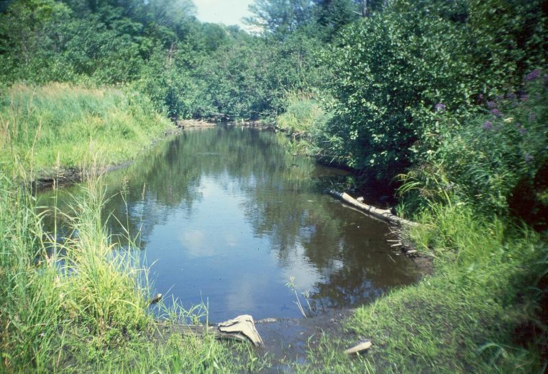 Marsh Headwater Stream Deer River David M. Hunt