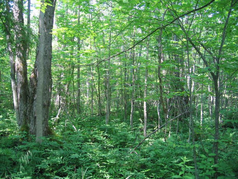 Silver maple-ash swamp at Fort Drum Training Area 10B. Gregory J. Edinger