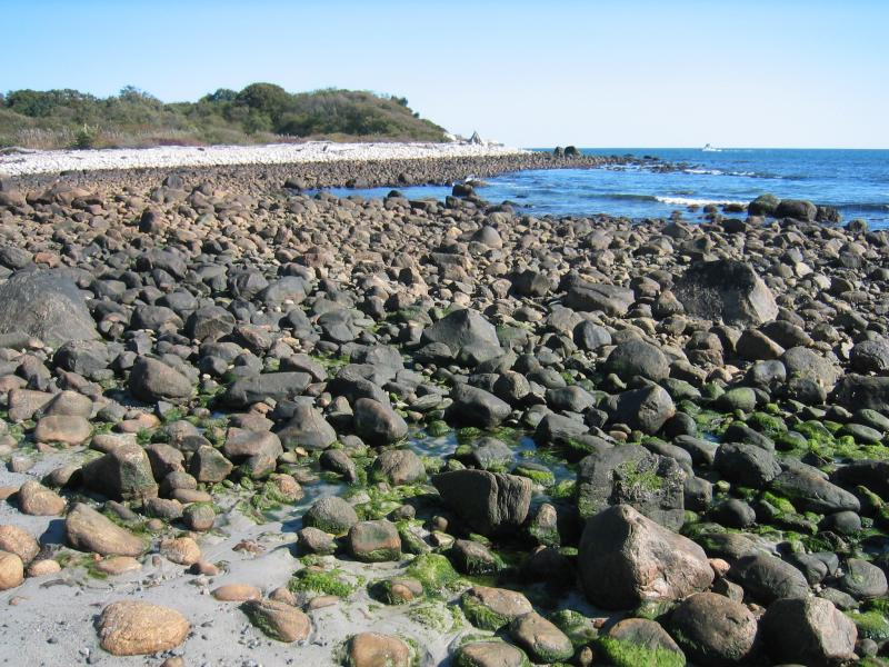 Marine rocky intertidal at low tide on Fisher's Island Gregory J. Edinger