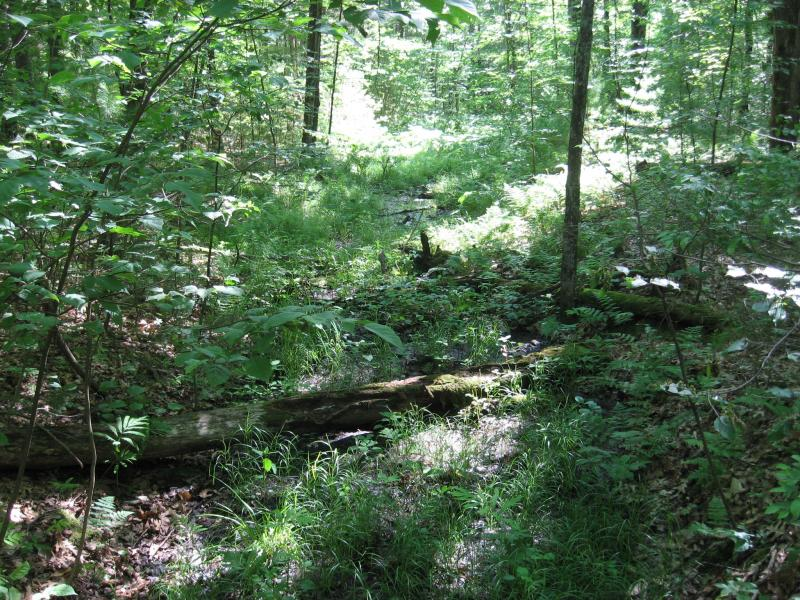 Intermittent stream at Camp Saratoga in Wilton Wildlife Preserve & Park Gregory J. Edinger