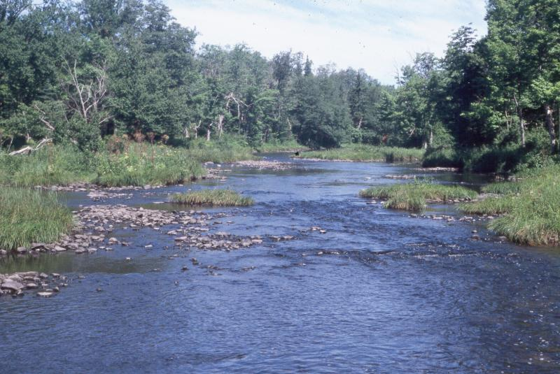 Confined river at East Branch Fish Creek David M. Hunt