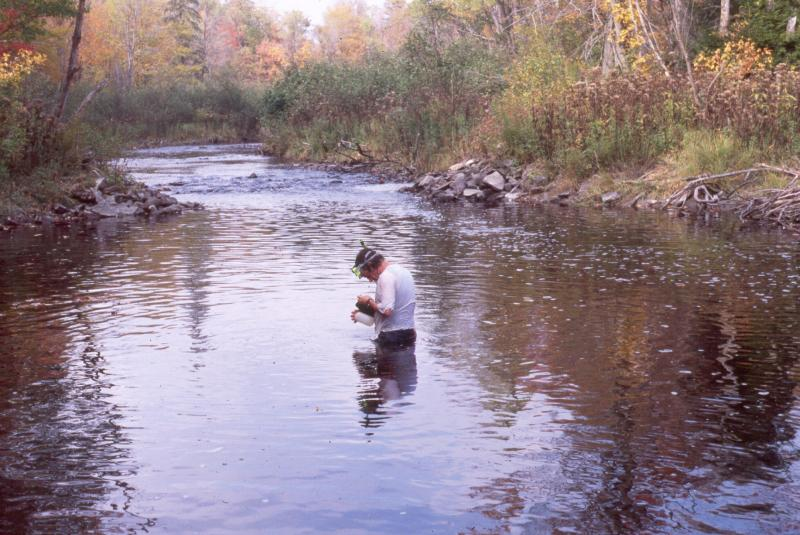 Rocky headwater stream at Fish Creek David Sampling Gregory J. Edinger