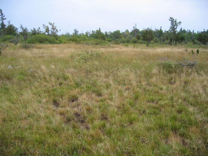 Alvar grassland at The Nature Conservancy's Chaumont Barrens, Jefferson Cp., NY. Gregory J. Edinger