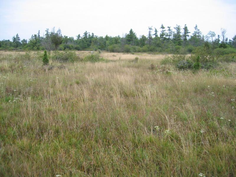 Wet alvar grassland at The Nature Conservancy's Chaumont Barrens, Jefferson Co., NY. Gregory J. Edinger