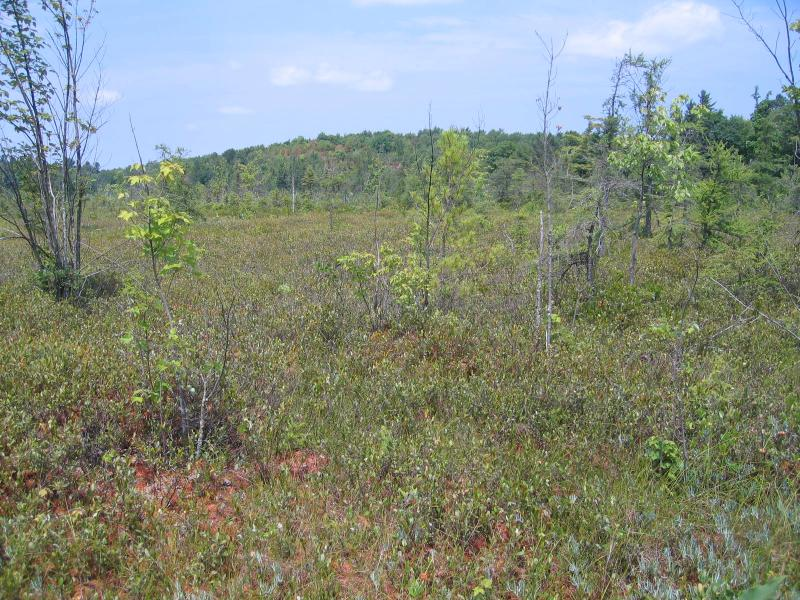 Dwarf shrub bog at Fort Drum Training Area 19C. Gregory J. Edinger