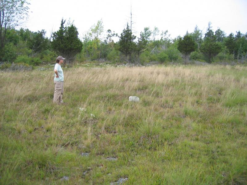 Laurie Lyons-Swift (NYNHP Ecologist) in wet alvar grassland at The Nature Conservancy's Chaumont Barrens in Jefferson Co., NY. Gregory J. Edinger