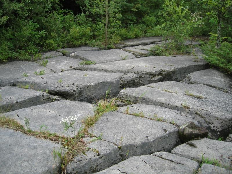 Fissures or grikes (or grykes) in limestone in alvar pavement grassland at The Nature Conservancy's Chaumont Barrens, in Jefferson Co., NY. Gregory J. Edinger