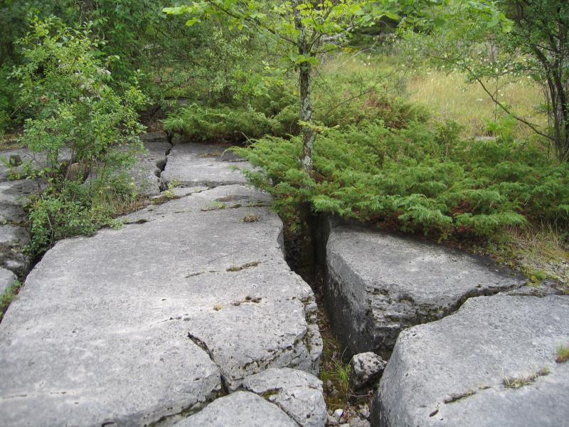 Fissures or grikes (or grykes) in limestone in alvar pavement (alvar shrubland in background) at The Nature Conservancy's Chaumont Barrens, in Jefferson Co., NY. Gregory J. Edinger