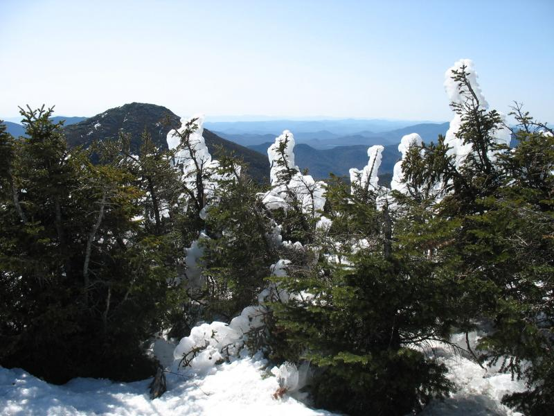 Alpine krummholz and rime ice in early spring on Mount Marcy Tim Howard