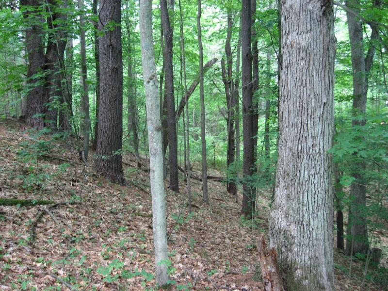 Appalachian oak-pine forest at Camp Saratoga in Wilton Wildlife Preserve & Park Gregory J. Edinger