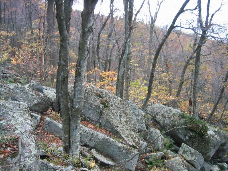 Acidic talus slope woodland in southern Shawangunk Mountains near Phillipsport. Gregory J. Edinger