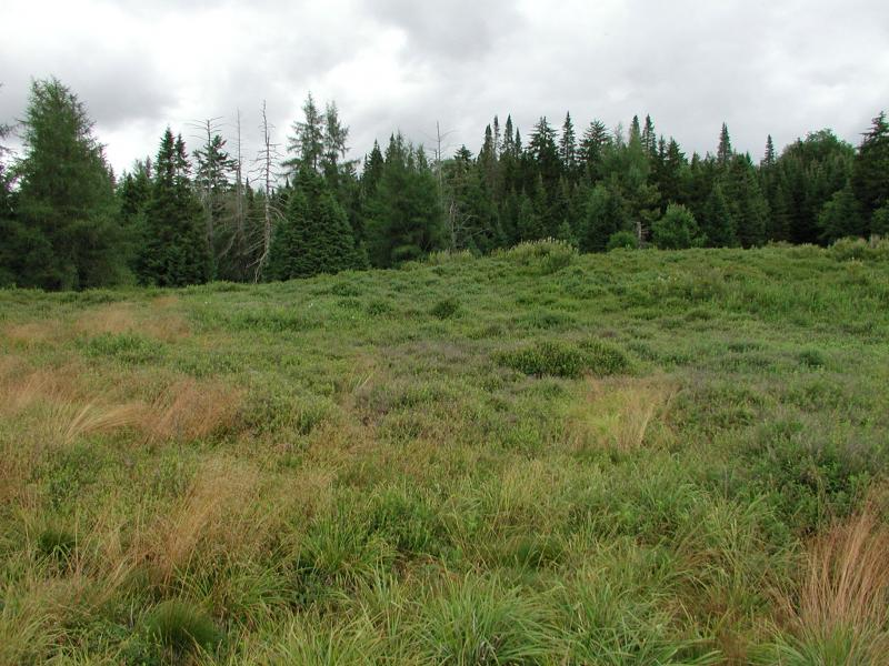 Boreal heath barrens at Raquette Boreal Forest Shane Gebauer