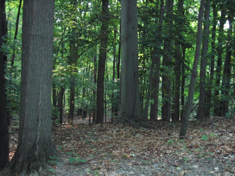 Beech-maple mesic forest at Saratoga National Historical Site (plot SBE1) Gregory J. Edinger