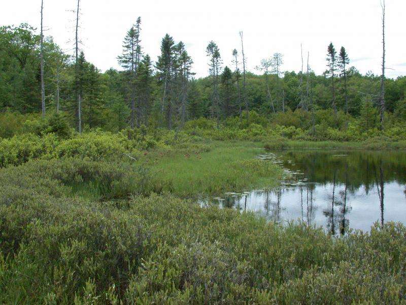 Patches of inland poor fen and dwarf shrub bog around bog lake/pond. Andrew Nelson, SUNY-Oswego