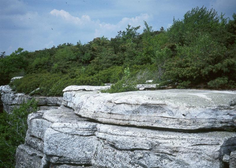 Dwarf pine ridges and cliff community at Sam's Point in the Shawangunk Mountains Stephen M. Young
