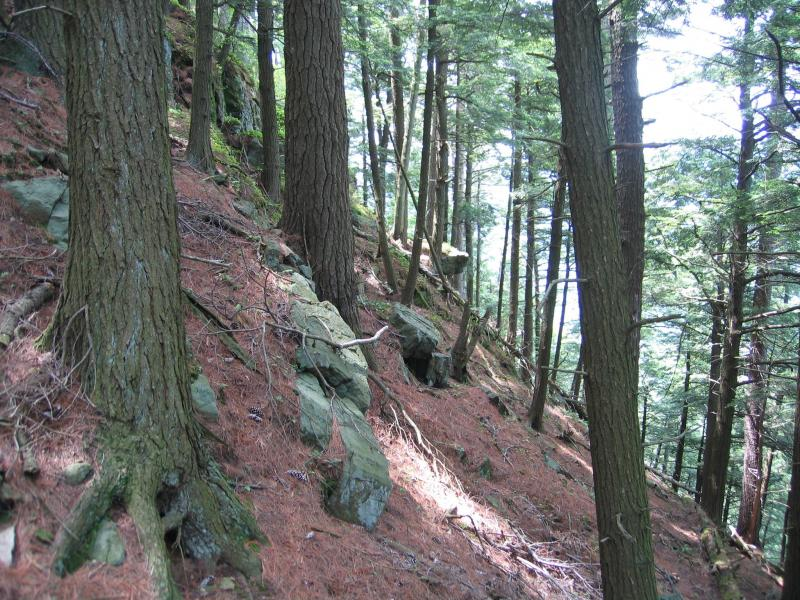 Hemlock-northern hardwood forest on the upper slope of The Pinnacle in Washington County, NY Gregory J. Edinger