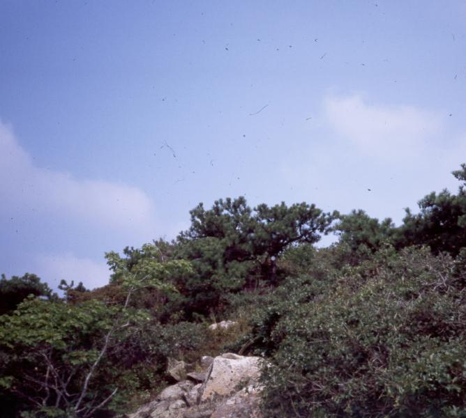Pitch pine-oak-heath rocky summit D.J. Evans