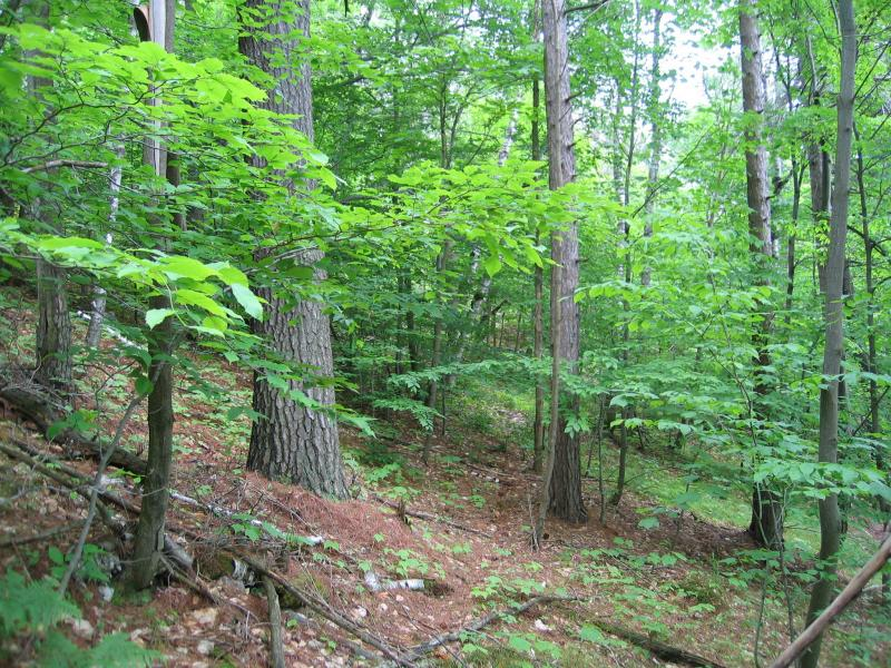 Pine-northern hardwood forest on the midslope of Buck Mountain in Washington County, NY Gregory J. Edinger
