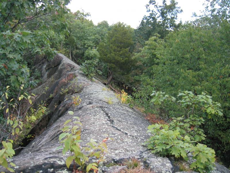 Red cedar rocky summit at Franklin D. Roosevelt NHS (plot RHB3) Gregory J. Edinger