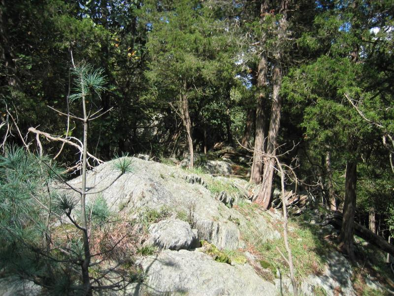 Red cedar rocky summit at Franklin D. Roosevelt NHS (plot RHC5) Gregory J. Edinger