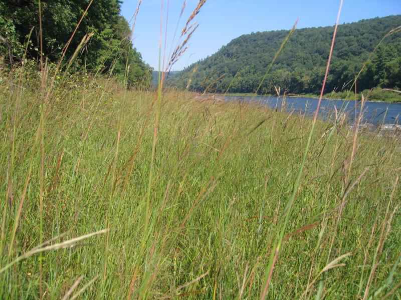 Floodplain grassland community on the Delaware River Gregory J. Edinger